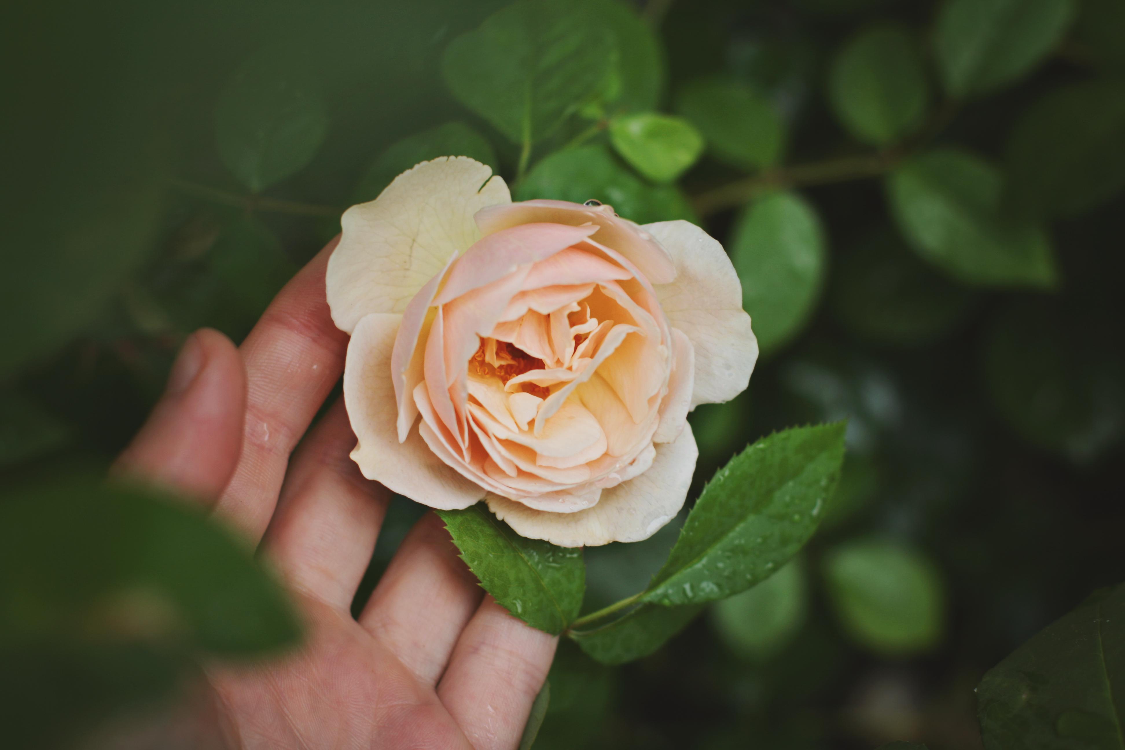 Iyla Rose Foundation